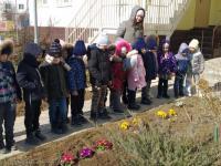 Наблюдение за Крымскими первоцветами