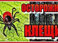 В Крыму работает «горячая линия» по профилактике «клещевых» инфекций!