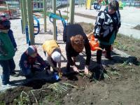 Акция по озеленению территории детского сада  продолжается